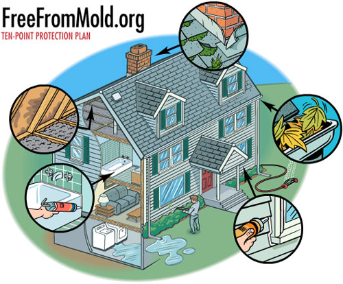 Free From Mold